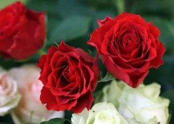 Flor' Alex - Art floral